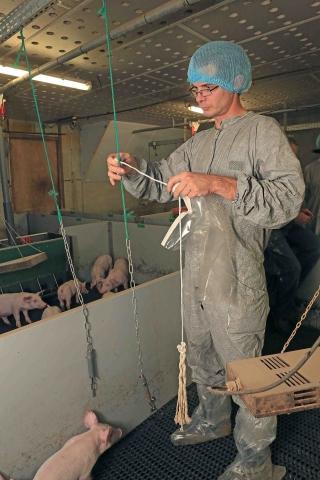 Vétérinaire prélevant de la salive