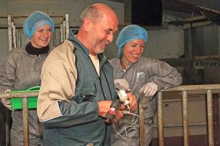 Vaccination en élevage de porc